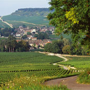 Wine and Voyages - Vineyard tours