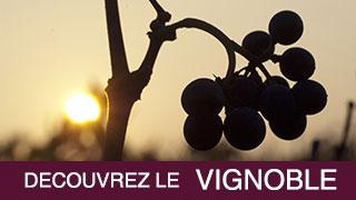 Découvrez le vignoble Bourguignon !