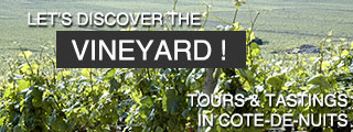 Discover the vineyard of Burgundy !